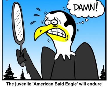 balding eagle cartoon