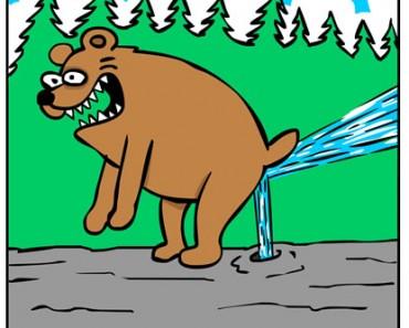Bidet Bear