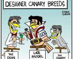 canary cartoon
