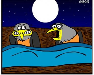 birds in bed cartoon