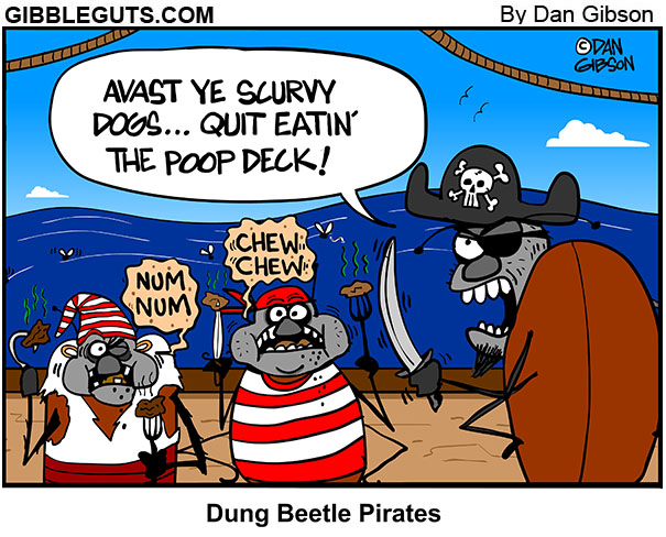 dung beetle pirates