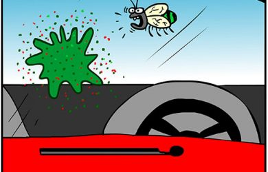 bug windshield