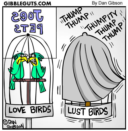Love Birds Cartoons Love Birds Cartoon From