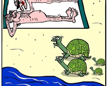old turtles cartoon
