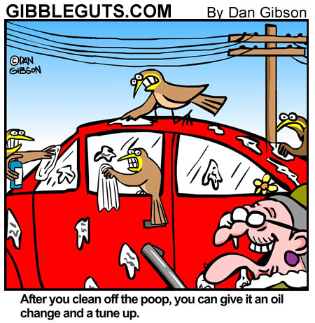 Birds cleaning droppings off old lady's car. A cartoon from Gibbleguts.com