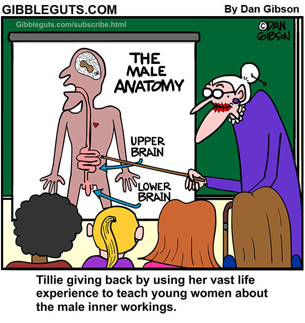 the male anatomy cartoon