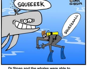 Whale cartoon from Gibbleguts