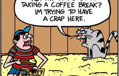 cat sandbox cartoon