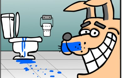 toilet drinking dog