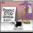 dog stud services cartoon